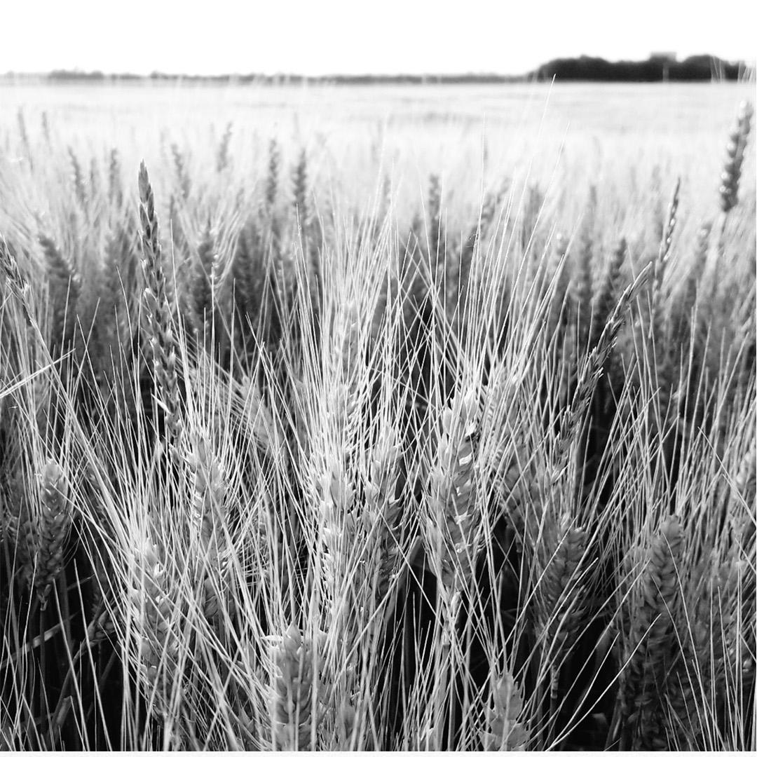 Tulln Natur Design Weizen